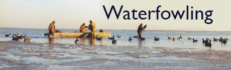 The World of Waterfowling